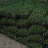 供应用于食用的青皮核桃 鲜核桃 香菱核桃 天然无污染绿色食品 产地直供质优价廉