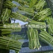 特价苗木 美国竹柳 竹柳苗基地供应图片