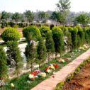 植树葬价格图片
