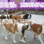 甘肃武威今年最火爆项目肉狗养殖图片