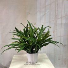 供应用于仿真植物绿植墙配材蕨类仿真植物绿植假植物仿真花草装饰植物假花