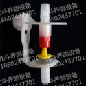 肉鸽鸡鸟鹌鹑专用自动饮水器饮水杯图片