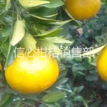 供应宜昌脐橙大量批发|湖北优质脐橙多少钱一斤|宜昌脐橙价格实惠批发
