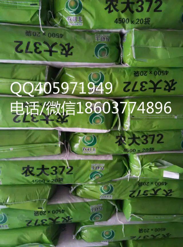 供应用于农业生产的高产抗病农大372玉米种子 高产抗病红轴大农大372玉米种子
