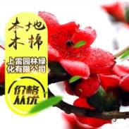 广西木棉图片