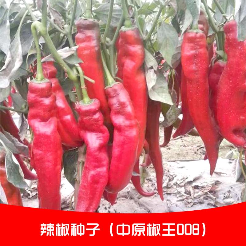 辣椒种子图片/辣椒种子样板图 (3)