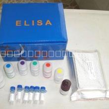 人白介素6(IL-6)ELISA批发