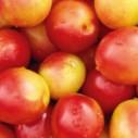供应用于销售的砀山县葛集镇大棚油桃批发油桃