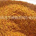 供应用于医药原材料的野生沙棘果 沙棘粉 宁夏六盘山纯