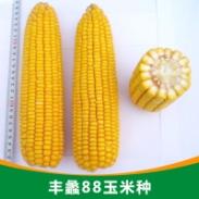 丰蠡88玉米种图片