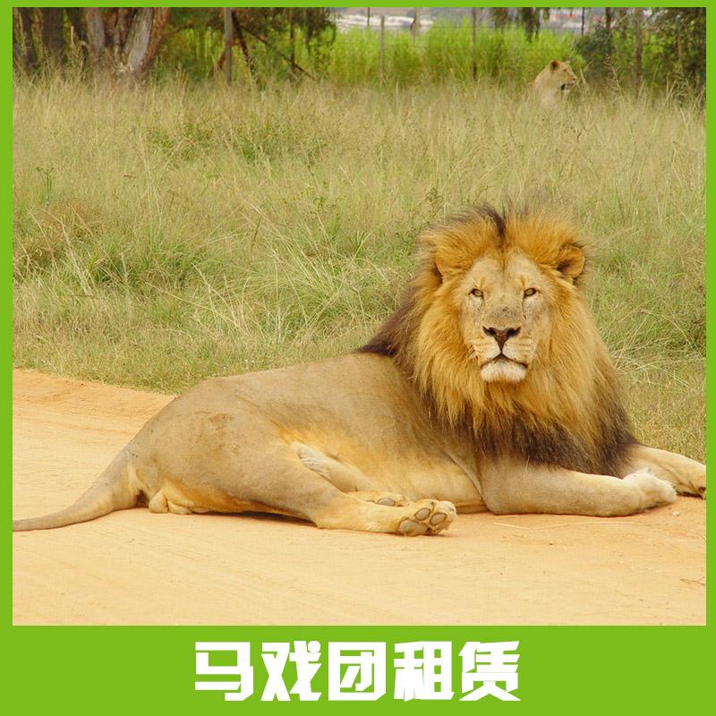 观赏性动物出租|动物表演,山东马戏团动物租赁