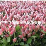 供应用于网兜、网套的厂家提供 玫瑰花网套 PE塑料保