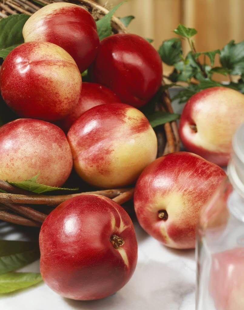 山东油桃供应价格,山东油桃批发价格,山东油桃价格行情