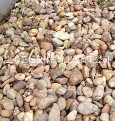 上海过滤鹅卵石'鹅卵石图片/上海过滤鹅卵石'鹅卵石样板图 (2)