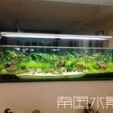 湖南长沙室内绿化、植物墙水草造景图片