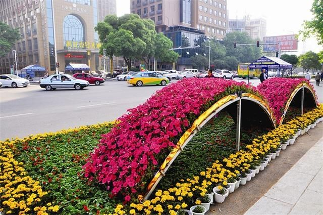 佛山植物雕塑塑造花卉扎景景观 植物塑造