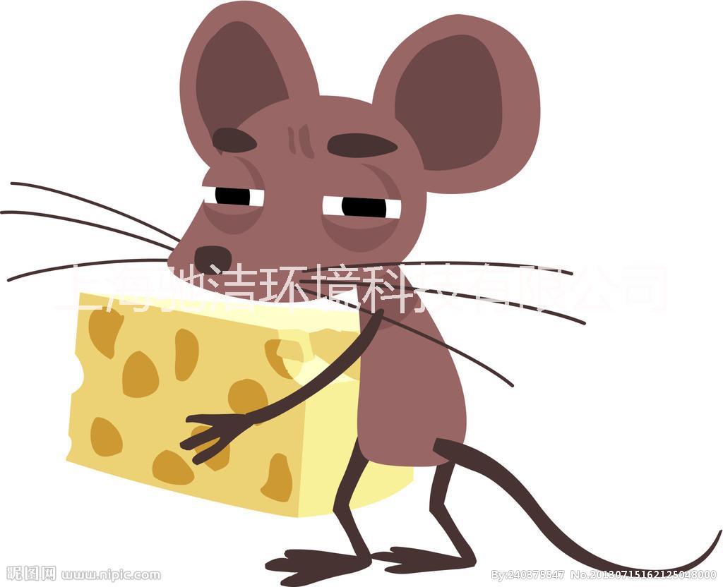 上海灭鼠公司上门服务,上海灭鼠公司上门服务找驰洁环境放心、安全