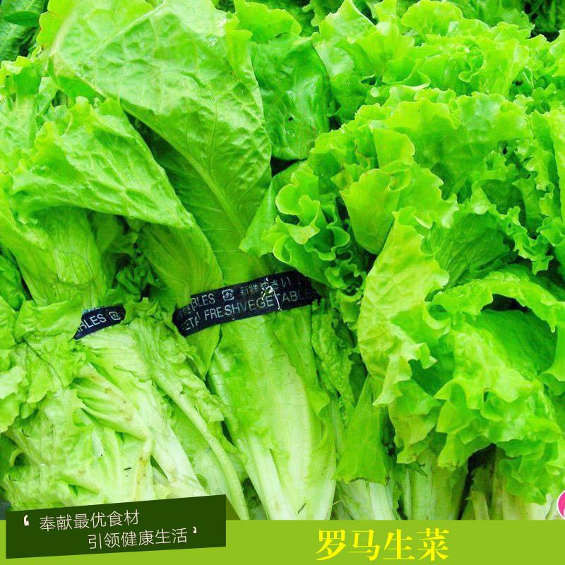 上海罗马生菜厂家配送,无公害健康蔬菜,新鲜包心罗马生菜