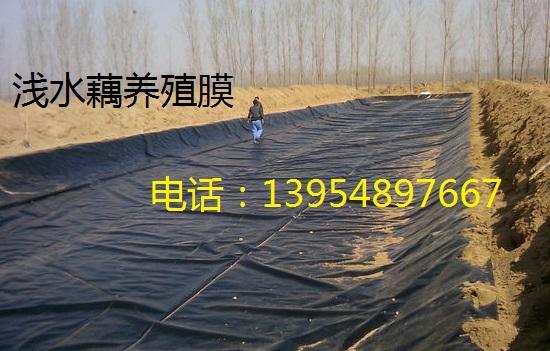 山东浅水藕种植防渗膜,浅水藕防渗膜,全新料防渗膜价格,短丝土工布