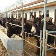 供应湖南优质肉驴养殖,肉驴的药用价值,肉驴的饲养方法与疾病预防批发