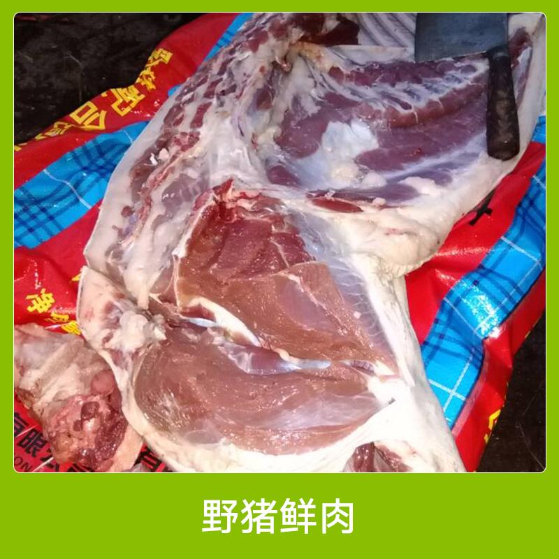 安徽特种野猪鲜肉 原生态养殖优质野猪鲜肉 新鲜野味特种野猪鲜肉