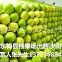 批发梅州沙田柚果园直卖有机水果柚子有机水果柚子