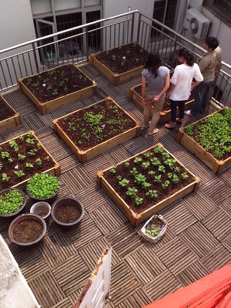 别墅菜园图片-别墅庭院菜园设计-别墅屋顶菜园建造-成都尚鼎丰公司