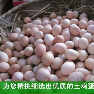 淮安草鸡蛋招商图片