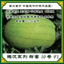 懒汉西瓜种子 省工省力,不整枝、不打杈、不压蔓  厂家直销图片