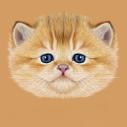 不能让猫猫吃的七种食物图片