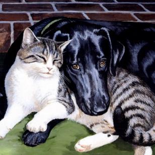 猫类常见病——外耳炎图片