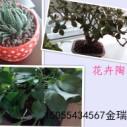 合肥陶粒价格图片