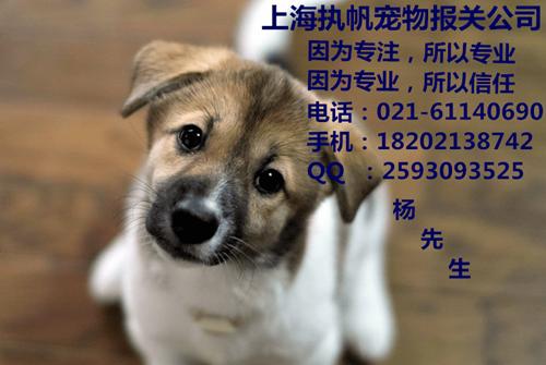 回国宠物进口报关介绍、上海宠物报关公司、入境宠物代理报关报检清关