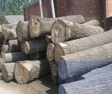 河南榆木烘干板材厂家 河南榆木烘干板材哪家好 河南榆木烘干板材 河南榆木烘干板材供应