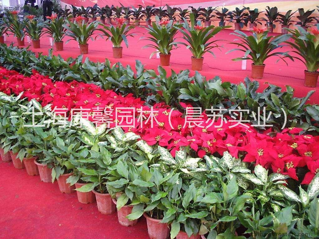 九龙坡区办公室花卉租赁公司 九龙坡区办公室植物租赁电话
