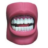 供应牙护理保健模型 自然大牙齿模型
