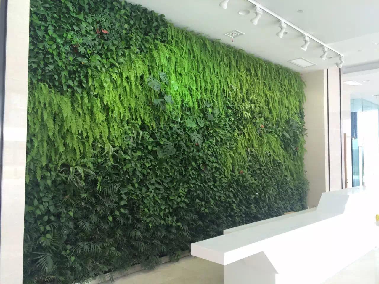 植物墙厂家_杭州绿植墙施工报价