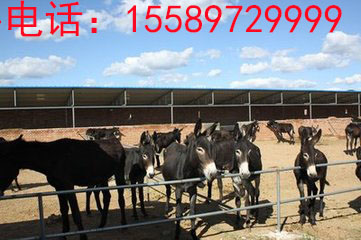 建立优良驴种繁育基地 让肉驴高产