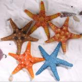海底系列海星水族工艺品厂家直销批发天然树脂材海底系列海星现热销中