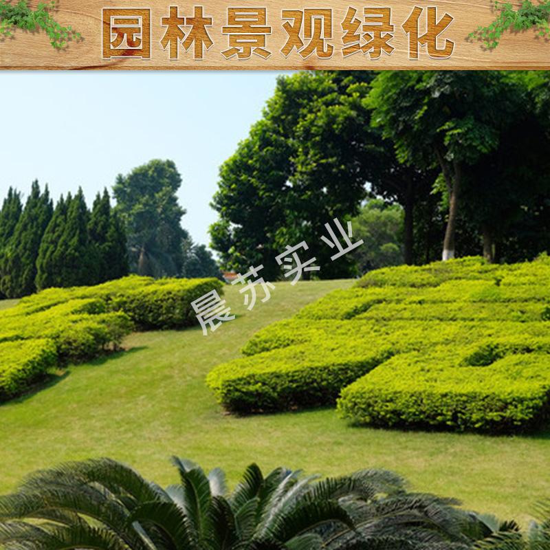 园林景观绿化道路绿化小区绿化养护价格实惠绿植花卉租赁园林景观绿化