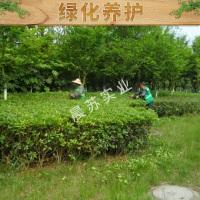 绿化养护出售