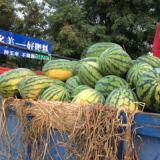 供应陕西哈密瓜大量销售 渭南哈密瓜大量供应,哈密瓜多少钱