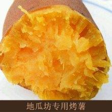 地瓜坊专用烤薯出售口感香甜软糯纯天然绿色食品烤地瓜土特产新鲜生地瓜农家自种批发
