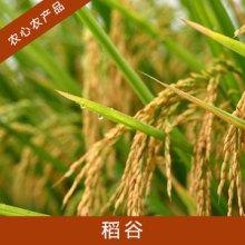 寿县农心农产品贸易稻谷高产水稻种子栽培稻籼稻谷/粳稻谷/糯稻谷