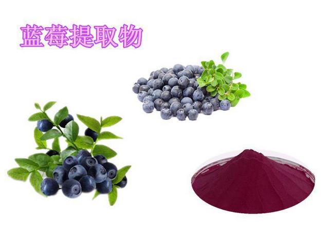 蓝莓提取物 10:1 蓝莓粉