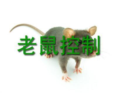 清远专业白蚁治防服务公司 清远校园白蚁治防服务价格