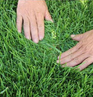 草坪图片/草坪样板图 (3)