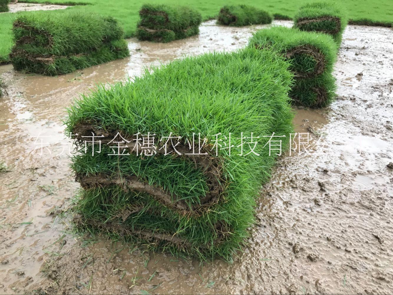 台湾草卷50×100×2片