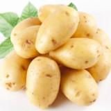土豆 邯郸土豆