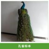 厂家直销定制孔雀标本蓝孔雀鸟动物标本橱窗店铺酒店装饰送根雕